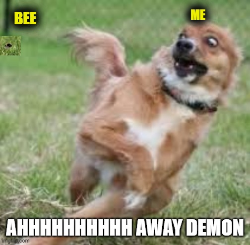 RUN!!! |  ME; BEE; AHHHHHHHHHH AWAY DEMON | image tagged in bees,scared dog | made w/ Imgflip meme maker