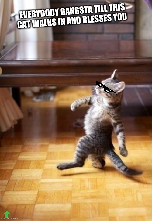 Cool Cat Stroll |  EVERYBODY GANGSTA TILL THIS CAT WALKS IN AND BLESSES YOU | image tagged in memes,cool cat stroll,cute cats | made w/ Imgflip meme maker