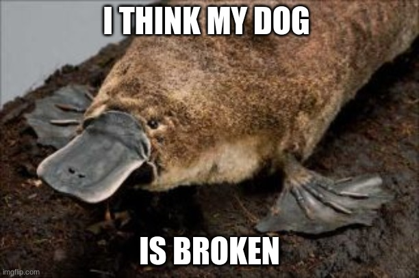 Dog Broken |  I THINK MY DOG; IS BROKEN | image tagged in dog memes | made w/ Imgflip meme maker