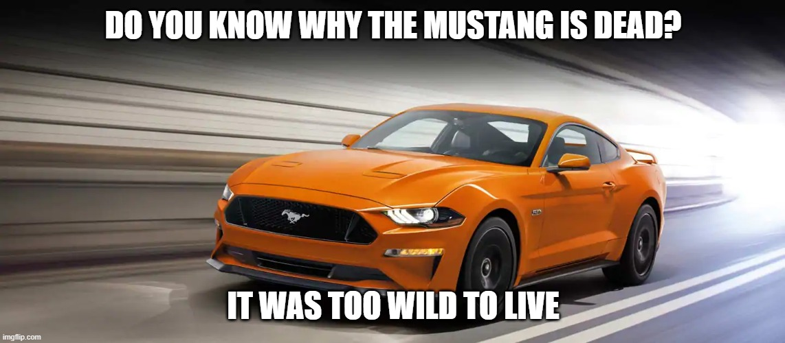 Ford Mustang memes |  DO YOU KNOW WHY THE MUSTANG IS DEAD? IT WAS TOO WILD TO LIVE | image tagged in car memes | made w/ Imgflip meme maker