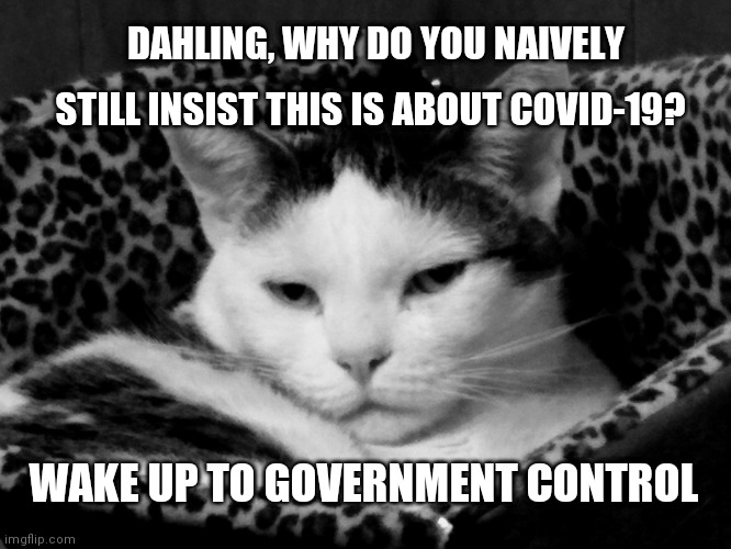 Woke Cat |  DAHLING, WHY DO YOU NAIVELY; STILL INSIST THIS IS ABOUT COVID-19? WAKE UP TO GOVERNMENT CONTROL | image tagged in covid-19,covid,government,new world order,the great awakening,cat | made w/ Imgflip meme maker