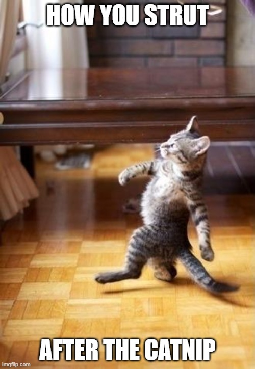 After the catnip |  HOW YOU STRUT; AFTER THE CATNIP | image tagged in memes,cool cat stroll | made w/ Imgflip meme maker