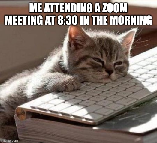 tired cat |  ME ATTENDING A ZOOM MEETING AT 8:30 IN THE MORNING | image tagged in tired cat | made w/ Imgflip meme maker