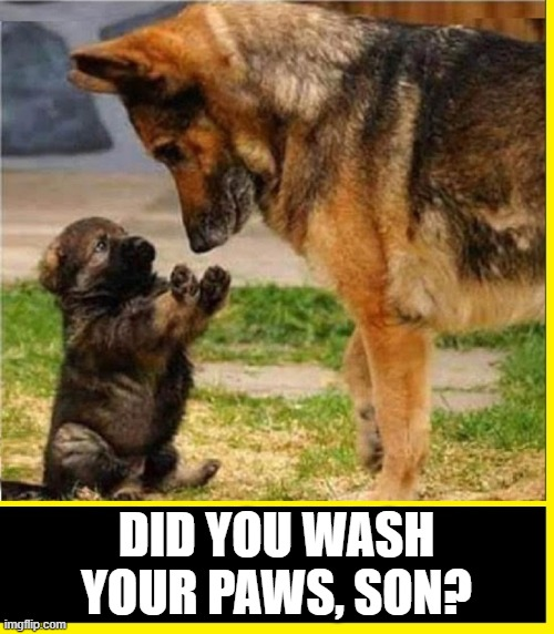 A Good Father |  DID YOU WASH YOUR PAWS, SON? | image tagged in vince vance,cute puppy,german shepherd,dogs,cute puppies,funny memes | made w/ Imgflip meme maker