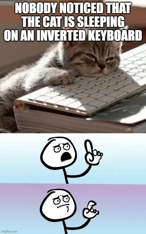 NOBODY NOTICED THAT THE CAT IS SLEEPING ON AN INVERTED KEYBOARD | image tagged in tired cat,speechless stickman | made w/ Imgflip meme maker