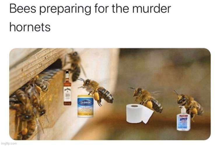 Bees preparing for the mrder hornets | image tagged in lol,oh my | made w/ Imgflip meme maker
