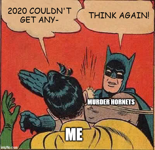 Batman Slapping Robin |  2020 COULDN'T GET ANY-; THINK AGAIN! MURDER HORNETS; ME | image tagged in memes,batman slapping robin | made w/ Imgflip meme maker