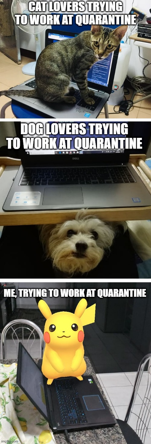 Not a pet person? |  CAT LOVERS TRYING TO WORK AT QUARANTINE; DOG LOVERS TRYING TO WORK AT QUARANTINE; ME, TRYING TO WORK AT QUARANTINE | image tagged in quarantine,pets,pokemon,pokemon go | made w/ Imgflip meme maker