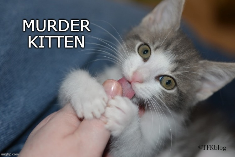 Mew-der |  MURDER KITTEN | image tagged in kitten,kittens,funny | made w/ Imgflip meme maker