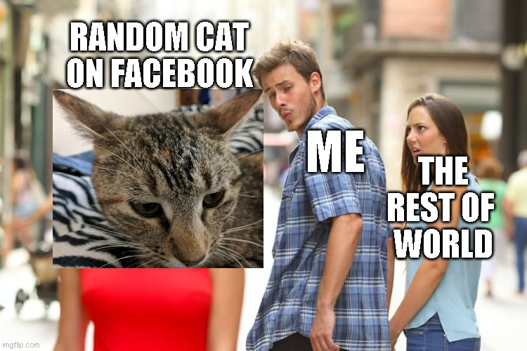 Distracted Boyfriend |  RANDOM CAT ON FACEBOOK; ME; THE REST OF  WORLD | image tagged in memes,distracted boyfriend | made w/ Imgflip meme maker