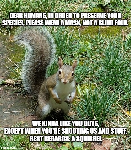 Squirrel |  DEAR HUMANS, IN ORDER TO PRESERVE YOUR SPECIES, PLEASE WEAR A MASK, NOT A BLIND FOLD. WE KINDA LIKE YOU GUYS, EXCEPT WHEN YOU'RE SHOOTING US AND STUFF. BEST REGARDS: A SQUIRREL | image tagged in squirrel | made w/ Imgflip meme maker