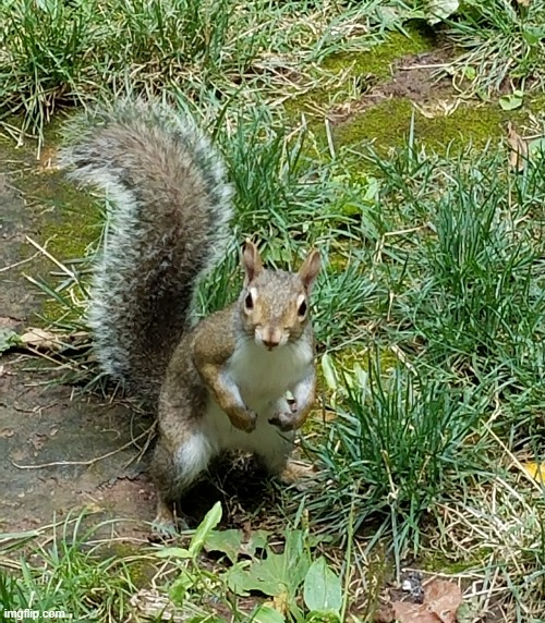 Squirrel | image tagged in squirrel | made w/ Imgflip meme maker