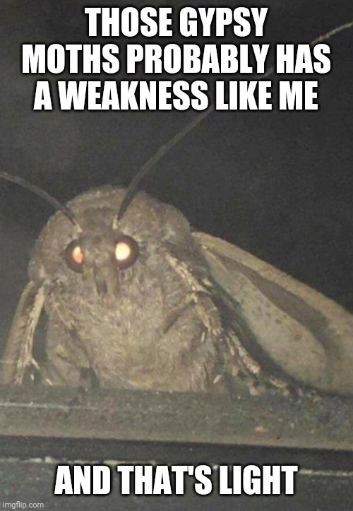 Moth |  THOSE GYPSY MOTHS PROBABLY HAS A WEAKNESS LIKE ME; AND THAT'S LIGHT | image tagged in moth,light,gypsy moth,memes | made w/ Imgflip meme maker