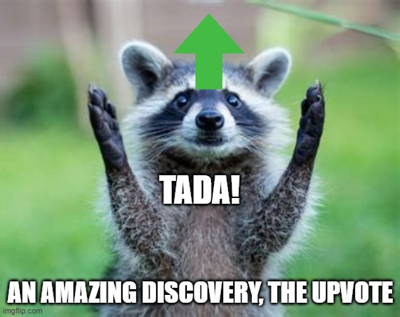 Tada! |  TADA! AN AMAZING DISCOVERY, THE UPVOTE | image tagged in upvote,racoon,funny,funny animals,animals | made w/ Imgflip meme maker