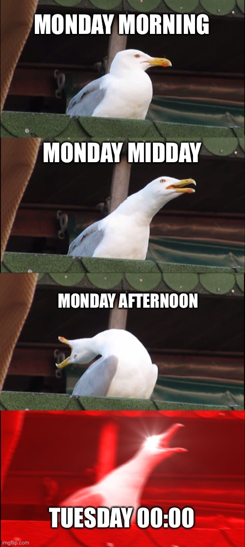 Inhaling Seagull Meme |  MONDAY MORNING; MONDAY MIDDAY; MONDAY AFTERNOON; TUESDAY 00:00 | image tagged in memes,inhaling seagull | made w/ Imgflip meme maker
