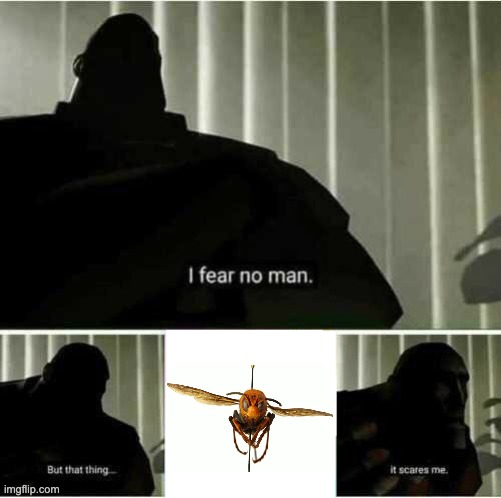 Fear Thee | image tagged in i fear no man,murder hornet,hornet,fun,tf2 heavy,tf2 | made w/ Imgflip meme maker