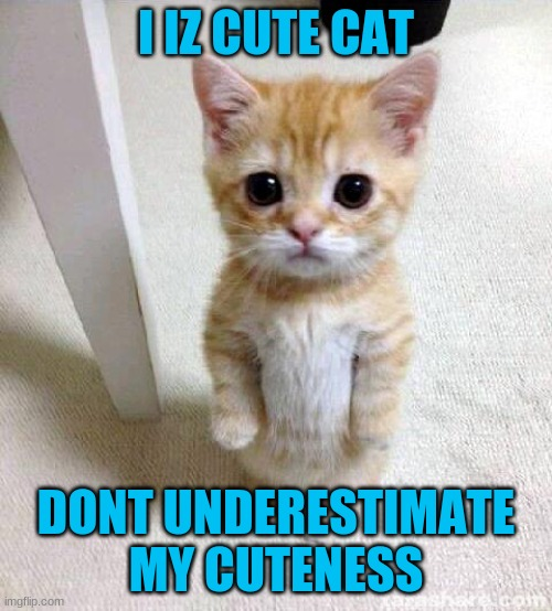 cute cat |  I IZ CUTE CAT; DONT UNDERESTIMATE MY CUTENESS | image tagged in memes,cute cat | made w/ Imgflip meme maker