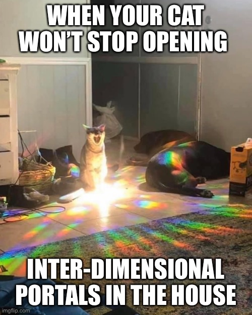 Cat Meme |  WHEN YOUR CAT WON'T STOP OPENING; INTER-DIMENSIONAL PORTALS IN THE HOUSE | image tagged in cat,kitty,cute cat,portal,inter-dimensional | made w/ Imgflip meme maker