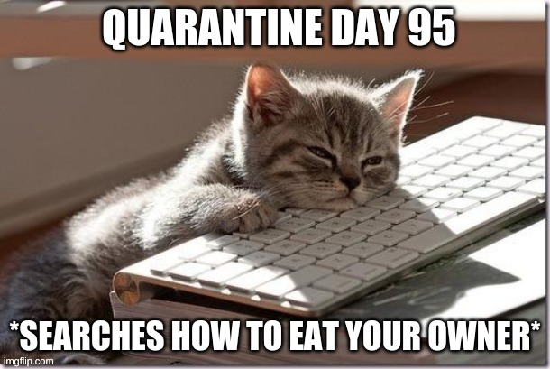 >:3 | image tagged in bored keyboard cat,quarantine,cats,memes,funny,dark humor | made w/ Imgflip meme maker