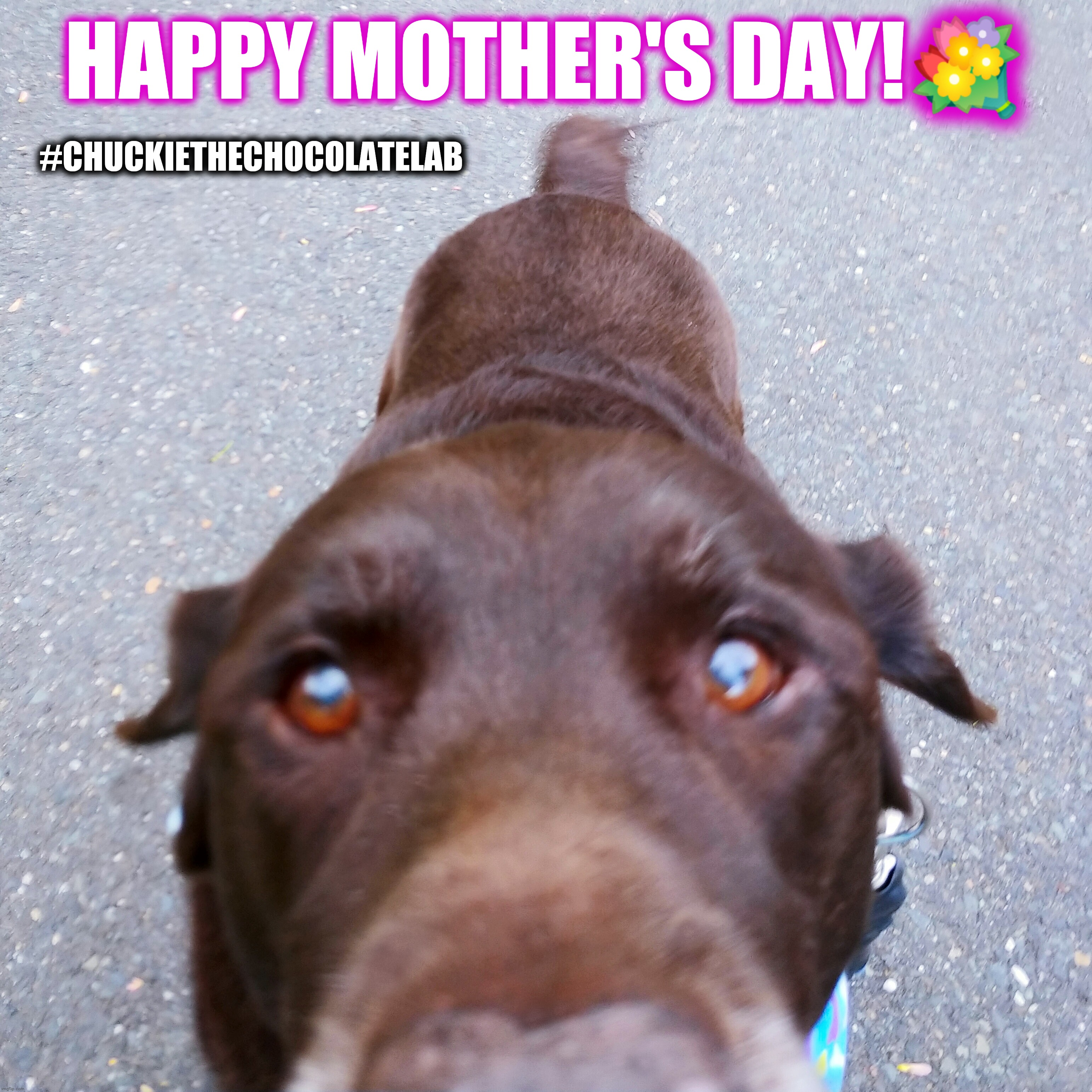 Happy Mother's Day! |  HAPPY MOTHER'S DAY!💐; #CHUCKIETHECHOCOLATELAB | image tagged in chuckie the chocolate lab,dogs,mother's day,cute animals,memes,happy mother's day | made w/ Imgflip meme maker
