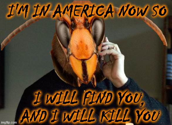 Liam Neeson Murder Hornet |  I'M IN AMERICA NOW SO; I WILL FIND YOU, AND I WILL KILL YOU | image tagged in murder hornet,memes,liam neeson taken,i will find you and i will kill you,first world problems,aint nobody got time for that | made w/ Imgflip meme maker