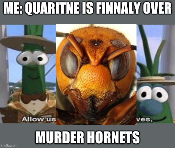 heres something to make you laugh |  ME: QUARITNE IS FINNALY OVER; MURDER HORNETS | image tagged in veggietales 'allow us to introduce ourselfs' | made w/ Imgflip meme maker