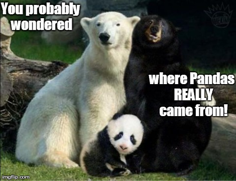 You probably wondered where Pandas REALLY came from! | image tagged in funny,animals,bears,pandas | made w/ Imgflip meme maker