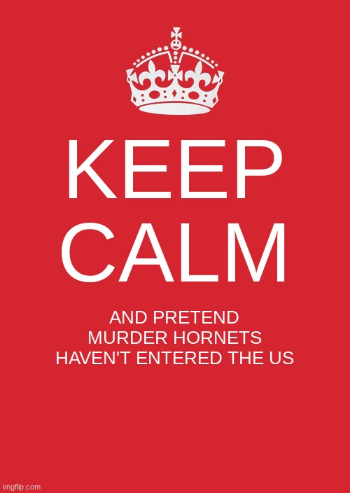 Keep Calm And Carry On |  KEEP CALM; AND PRETEND MURDER HORNETS HAVEN'T ENTERED THE US | image tagged in memes,keep calm and carry on red | made w/ Imgflip meme maker