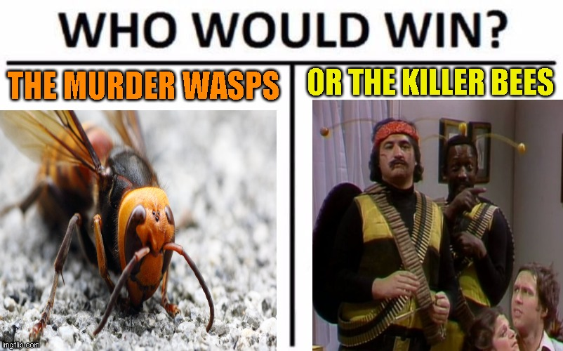 I know which I rather see |  OR THE KILLER BEES; THE MURDER WASPS | image tagged in memes,who would win,snl | made w/ Imgflip meme maker