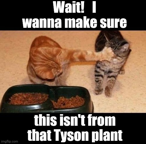 Cats looking out for each other |  Wait!   I wanna make sure; this isn't from that Tyson plant | image tagged in cats share food,funny,lol | made w/ Imgflip meme maker