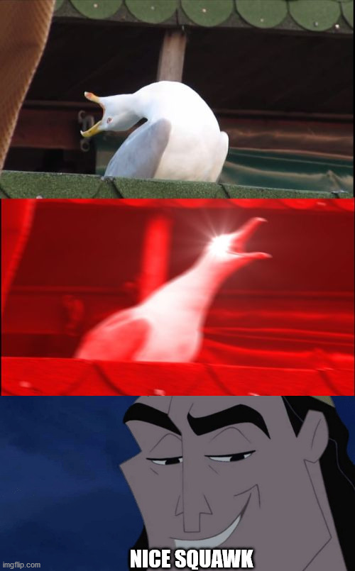 NICE SQUAWK | image tagged in screaming seagull,it's all coming together | made w/ Imgflip meme maker