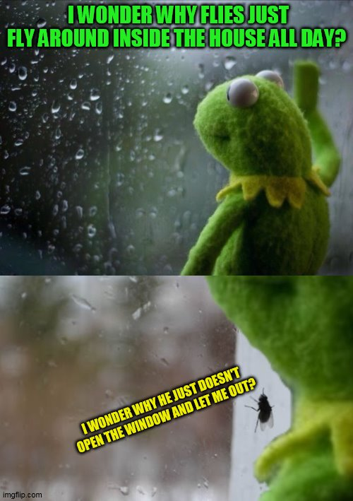 Kermit Window |  I WONDER WHY FLIES JUST FLY AROUND INSIDE THE HOUSE ALL DAY? I WONDER WHY HE JUST DOESN'T OPEN THE WINDOW AND LET ME OUT? | image tagged in kermit window,flies,memes,sad kermit,wonder,windows | made w/ Imgflip meme maker