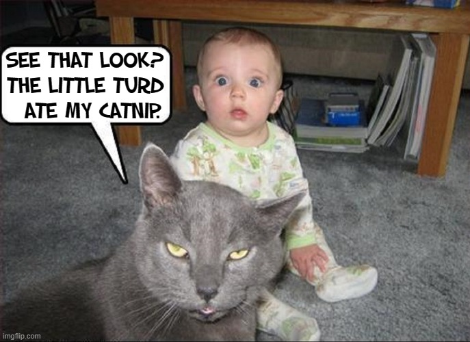 Catnip Capers |  SEE THAT LOOK? THE LITTLE TURD   ATE MY CATNIP. | image tagged in vince vance,cats,wired,baby,catnip,funny cat memes | made w/ Imgflip meme maker