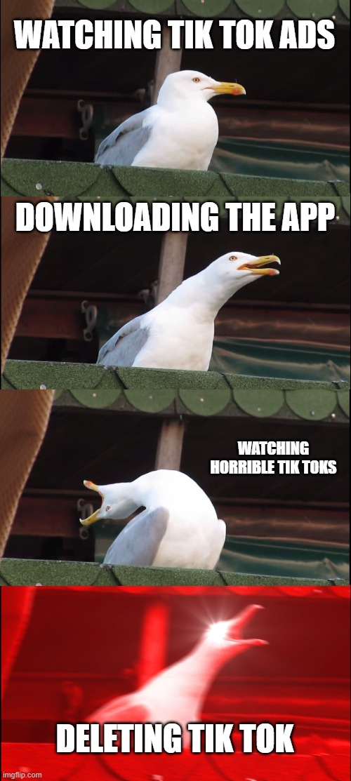 Inhaling Seagull |  WATCHING TIK TOK ADS; DOWNLOADING THE APP; WATCHING HORRIBLE TIK TOKS; DELETING TIK TOK | image tagged in memes,inhaling seagull,tik tok,delet this,funny | made w/ Imgflip meme maker