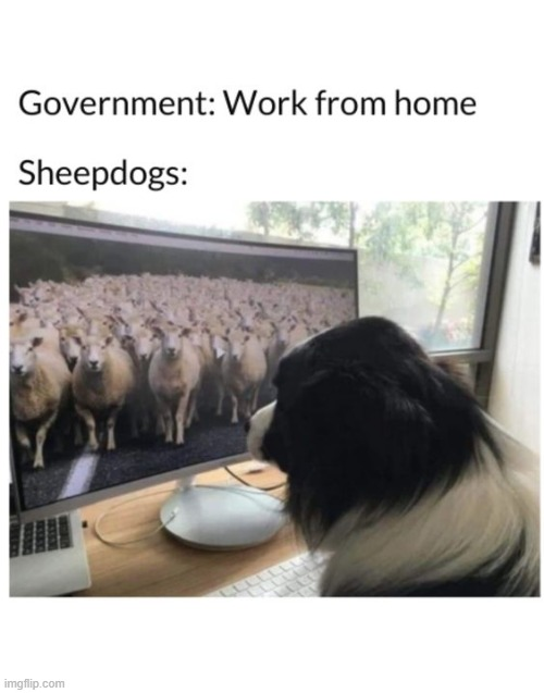 Sheepdogs Are the Shizzzzzznit! | image tagged in sheep,dogs,funny memes | made w/ Imgflip meme maker