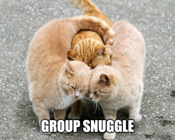 SNUGGLE GROUP |  GROUP SNUGGLE | image tagged in cats,funny cats,cute cat | made w/ Imgflip meme maker