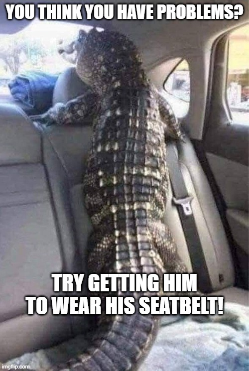 Alligator and seatbelt |  YOU THINK YOU HAVE PROBLEMS? TRY GETTING HIM TO WEAR HIS SEATBELT! | image tagged in gator,alligator,seatbelt | made w/ Imgflip meme maker