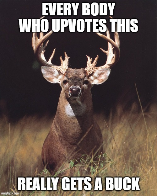 EVERY BODY WHO UPVOTES THIS; REALLY GETS A BUCK | image tagged in buck deer,memes,funny,upvotes | made w/ Imgflip meme maker