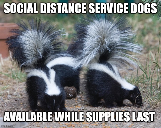 Social distance service dogs |  SOCIAL DISTANCE SERVICE DOGS; AVAILABLE WHILE SUPPLIES LAST | image tagged in service dog,social distance,skunk,coronavirus | made w/ Imgflip meme maker