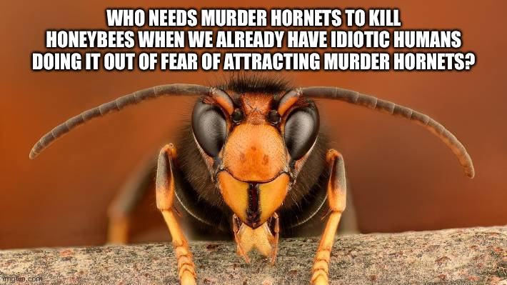 Humans do stupid things when they are afraid |  WHO NEEDS MURDER HORNETS TO KILL HONEYBEES WHEN WE ALREADY HAVE IDIOTIC HUMANS DOING IT OUT OF FEAR OF ATTRACTING MURDER HORNETS? | image tagged in murder hornet,memes,bee,fear,stupid people,2020 | made w/ Imgflip meme maker