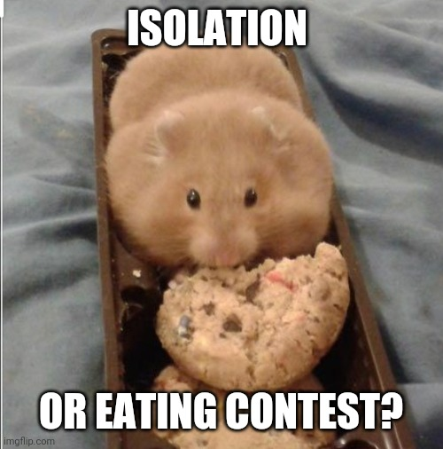 Snacking in isolation |  ISOLATION; OR EATING CONTEST? | image tagged in hamster,fat,snacks,isolation,quarantine | made w/ Imgflip meme maker