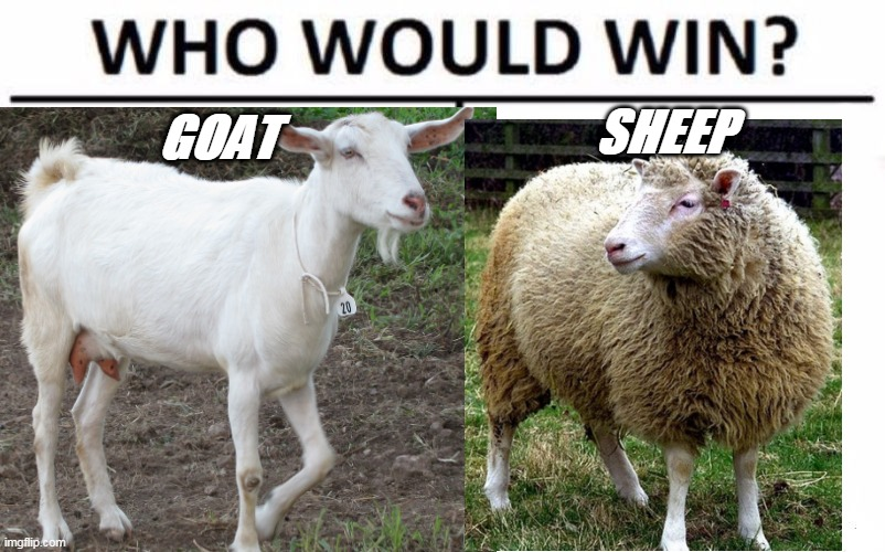 Baa or Maa? |  SHEEP; GOAT | image tagged in goat or sheep,vote animal | made w/ Imgflip meme maker