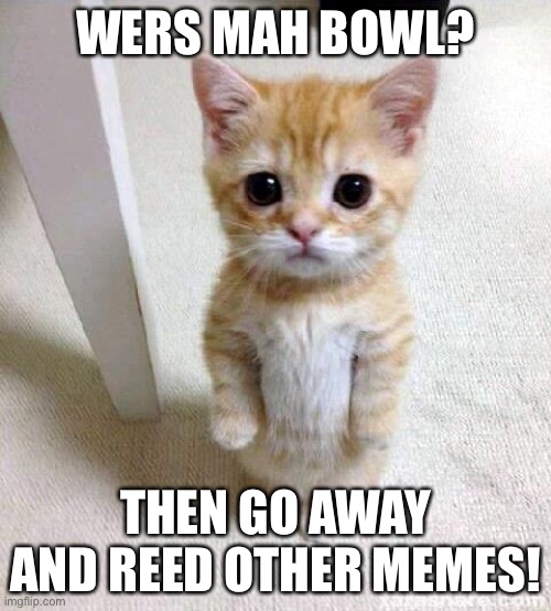 Mah bowl? |  WERS MAH BOWL? THEN GO AWAY AND REED OTHER MEMES! | image tagged in memes,cute cat | made w/ Imgflip meme maker