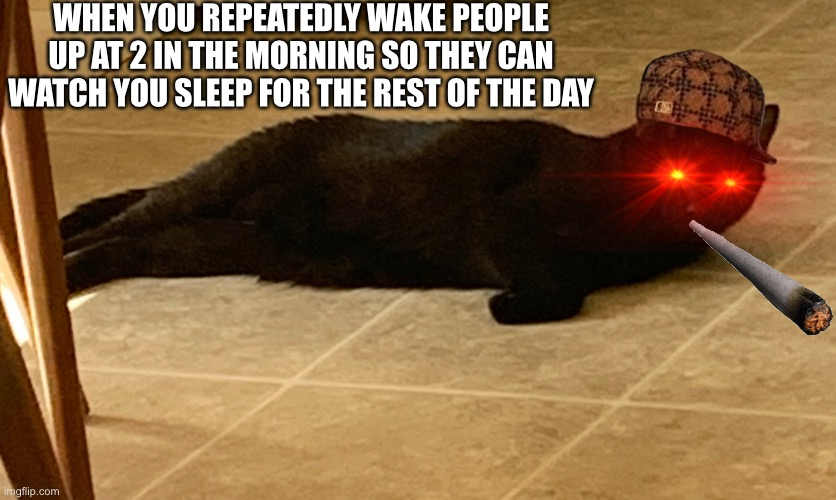 Evil panther |  WHEN YOU REPEATEDLY WAKE PEOPLE UP AT 2 IN THE MORNING SO THEY CAN WATCH YOU SLEEP FOR THE REST OF THE DAY | made w/ Imgflip meme maker