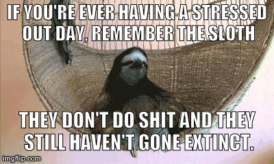 Meme Don T Stress Funny : Remember the sloth imgflip