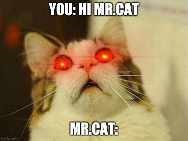 mr.coot is here |  YOU: HI MR.CAT; MR.CAT: | image tagged in memes,cat | made w/ Imgflip meme maker