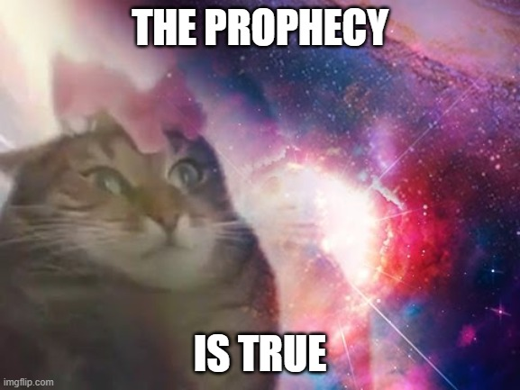 THE PROPHECY IS TRUE | image tagged in the prophecy is true cat | made w/ Imgflip meme maker
