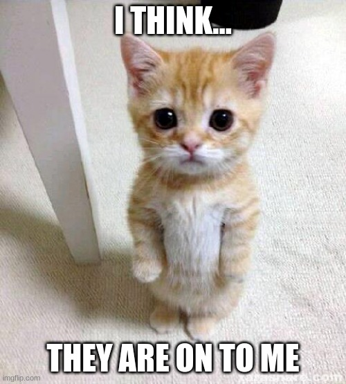 Oh no |  I THINK... THEY ARE ON TO ME | image tagged in memes,cute cat | made w/ Imgflip meme maker