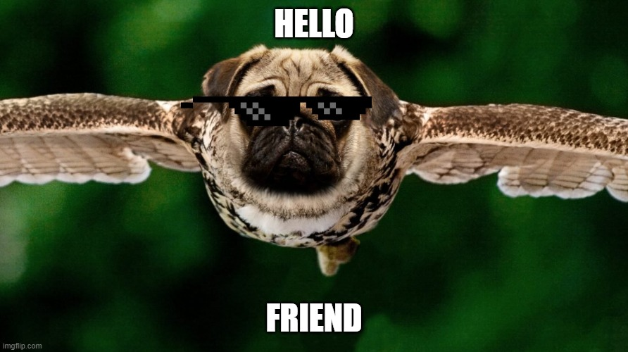 HELLO; FRIEND | image tagged in pug owl | made w/ Imgflip meme maker