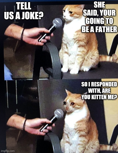 Cat Joke |  TELL US A JOKE? SHE SAID, YOUR GOING TO BE A FATHER; SO I RESPONDED WITH, ARE YOU KITTEN ME? | image tagged in cat interview crying,funny memes | made w/ Imgflip meme maker